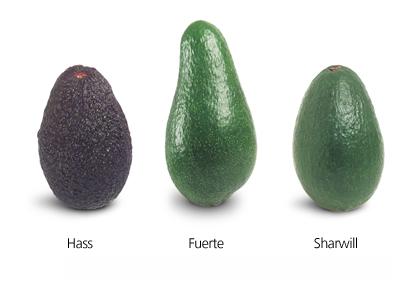 Imaginea reprezentativa pentru articolul: Avocado si beneficiile sale pentru sanatate
